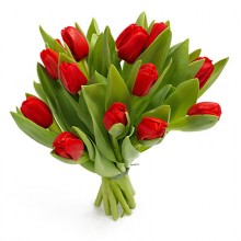 Bukiet 12 Tulipanów Czerwnonych