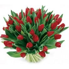 Bukiet 35 Tulipanów Czerwonych