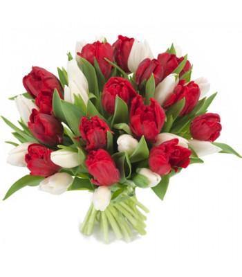 Bukiet 21 Tulipanów Czerwono-Białych