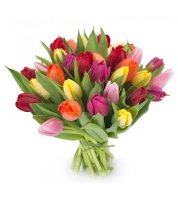 Bukiet 25 Tulipanów Kolorowych