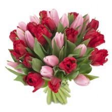 Bukiet 30 Tulipanów Czerwono-Różowych